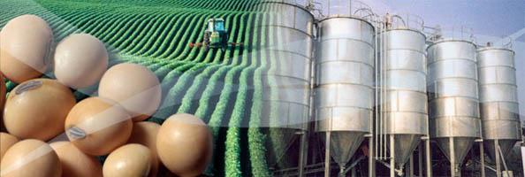 Bioindustria Argentina, aumenta la producción de biodiésel y ...