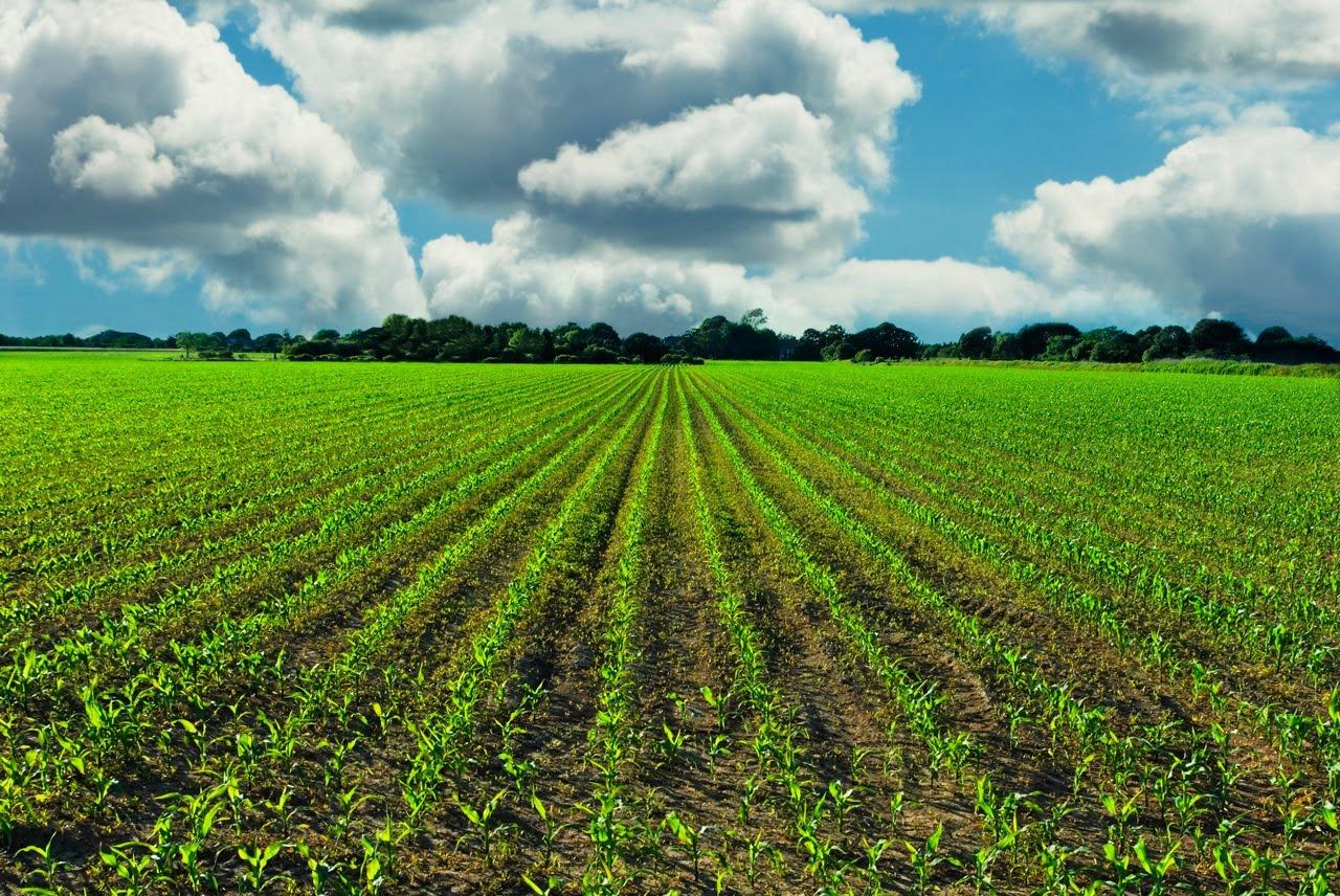 farm-fields-with-clouds21